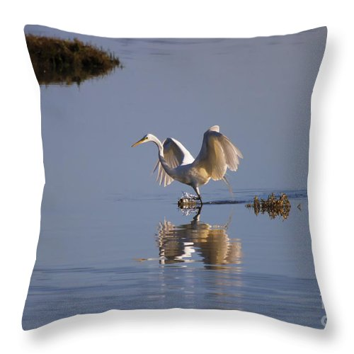 Egret Throw Pillow featuring the photograph Egret Reflections by Mike Dawson