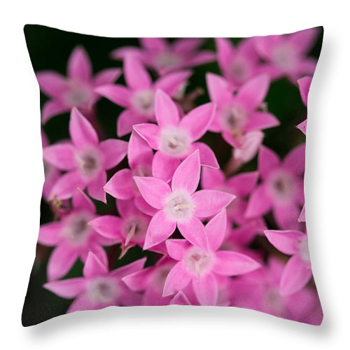 Pink Throw Pillow featuring the photograph Egyptian Star Flowers Or Penta by Eti Reid