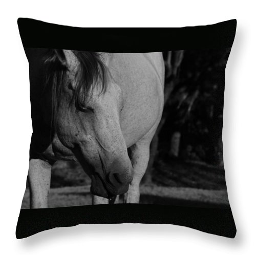 Horse Throw Pillow featuring the photograph Einstein by Ryan Dove