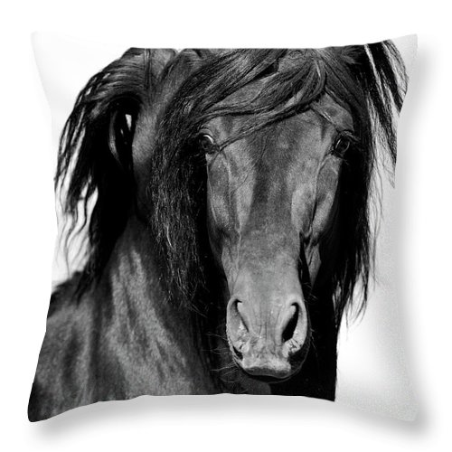 Spanish Horse Throw Pillow featuring the photograph El Caballo Negro by Carol Walker