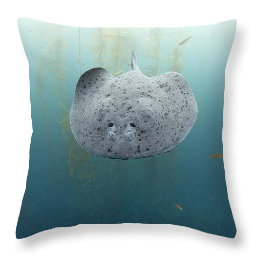 Feb0514 Throw Pillow featuring the photograph Electric Ray Cortes Bank California by Richard Herrmann
