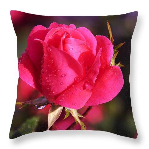 Electron Tea Rose Throw Pillow featuring the photograph Electron Tea Rose by Paul Cannon
