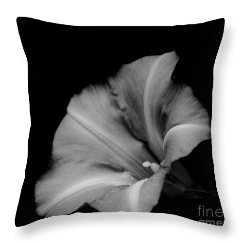 Nature Throw Pillow featuring the photograph Elegance by Brook Steed