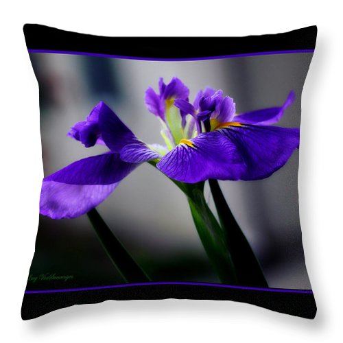 Iris Throw Pillow featuring the photograph Elegant Iris with Black Border by Lucy VanSwearingen