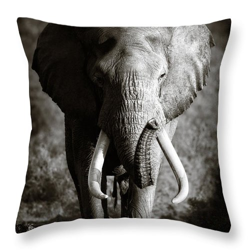 Elephant Throw Pillow featuring the photograph Elephant Bull by Johan Swanepoel