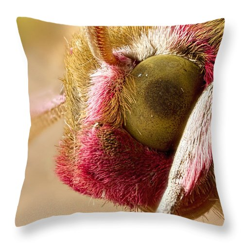 Wildlife Throw Pillow featuring the photograph Elephant Hawk Moth Extreme Macro by Mr Bennett Kent