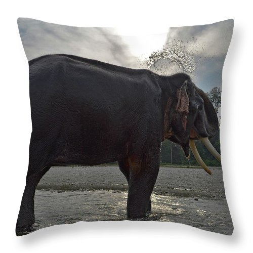 Animal Themes Throw Pillow featuring the photograph Elephant Taking A Shower On Its Own by Photograph By Anindya Sankar Dey