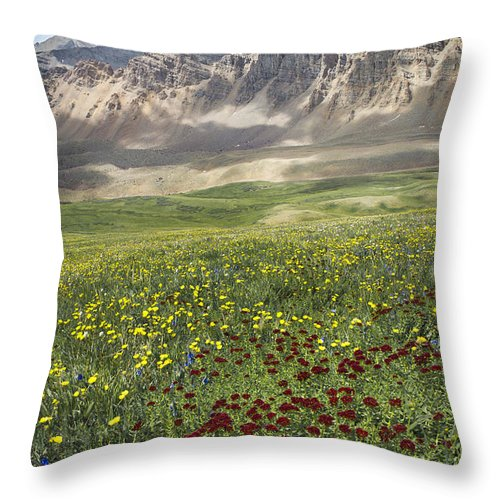 Mountain Throw Pillow featuring the pyrography Elk Mountain Wildflowers by Aaron Spong