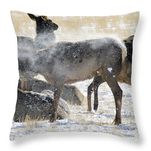 Elk Throw Pillow featuring the photograph Elk Shaking Off Snow  #0530 by J L Woody Wooden
