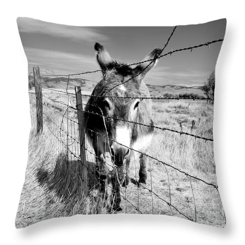 Still Life Throw Pillow featuring the photograph Elwood In Montana by Lauren Leigh Hunter Fine Art Photography