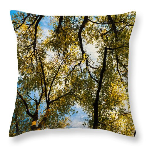 Trees Throw Pillow featuring the photograph High Links by Southwindow Eugenia Rey-Guerra