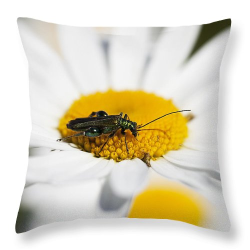 Emerald Insect On White Daisy Image Print Throw Pillow featuring the sculpture Emerald Yellow And White by David Davies