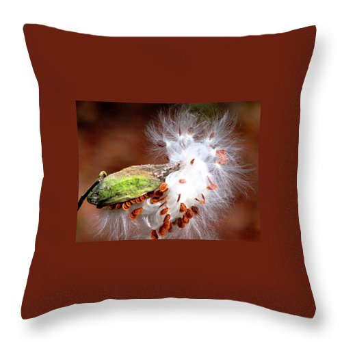 Milkweed Throw Pillow featuring the photograph Emerging by Angela Davies