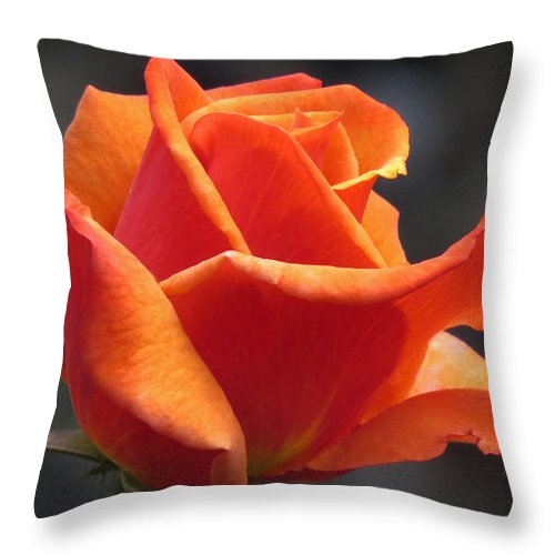 Red Rose Throw Pillow featuring the photograph Emerging Red Rose by John Topman