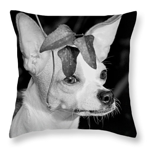 Chihuahua Throw Pillow featuring the photograph Emperor Louie by Paul Wilford
