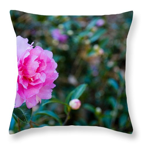 Pink Throw Pillow featuring the photograph Enchanted by Breanna Calkins
