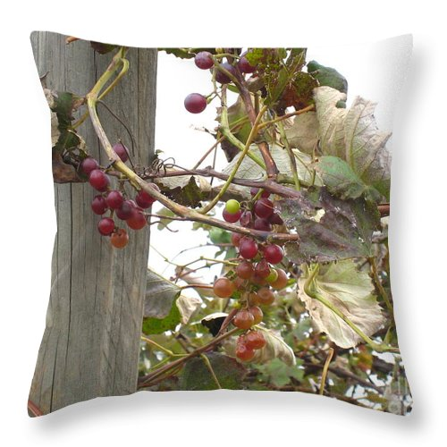 Grapevine Throw Pillow featuring the photograph End Of Season Grapes by Jennifer E Doll