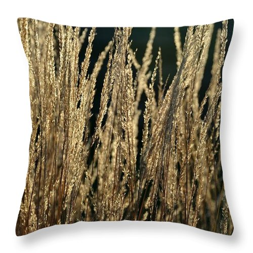 September Throw Pillow featuring the photograph End Of Summer Grasses by Gregory Strong