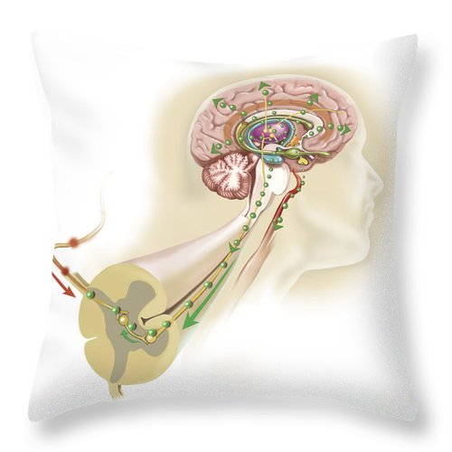 Square Image Throw Pillow featuring the digital art Endorphins Released In The Hypothalamus by TriFocal Communications
