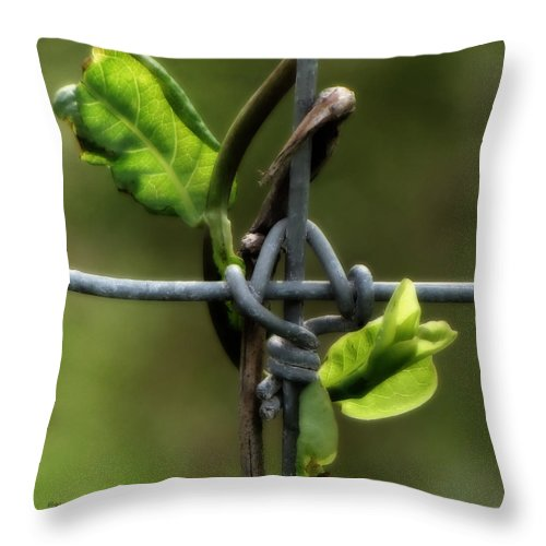 Fence Throw Pillow featuring the photograph Entwined by Lucy VanSwearingen
