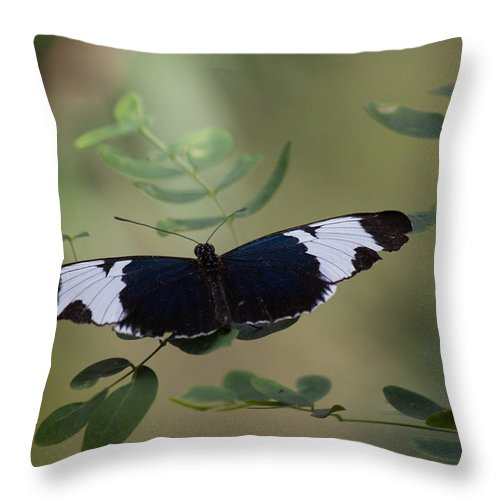Butterfly Throw Pillow featuring the photograph Equal by Ronald Lake