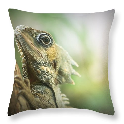 Lizard Throw Pillow featuring the photograph Eric The Lizard by Sherry Wright