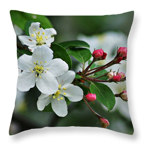 Springtime Throw Pillow featuring the photograph Essence by Ira Shander