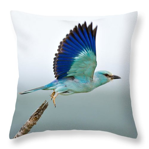 Action Throw Pillow featuring the photograph Eurasian Roller by Johan Swanepoel