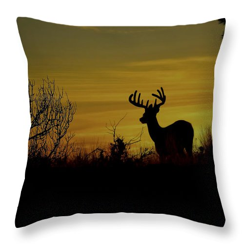 White Tailed Buck Throw Pillow featuring the photograph Evening Buck by Steve McKinzie