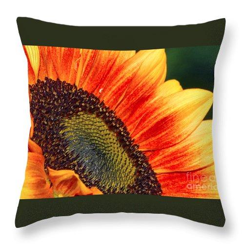 Evening Sun Throw Pillow featuring the photograph Evening Sun Sunflower by Sharon Talson