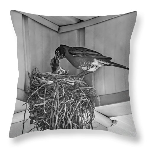 Bird Throw Pillow featuring the photograph Every Spring by Steve Harrington