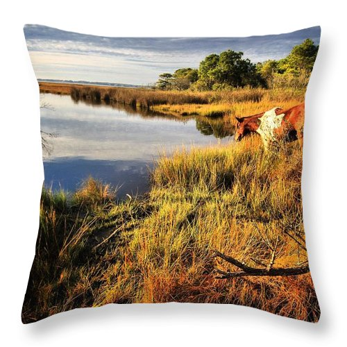 Horses Throw Pillow featuring the photograph Everybody In Da Pool-cannonball by Robert McCubbin