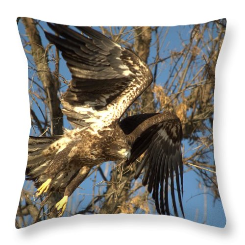 Eagle Throw Pillow featuring the photograph Exploding To Flight by Bonfire Photography