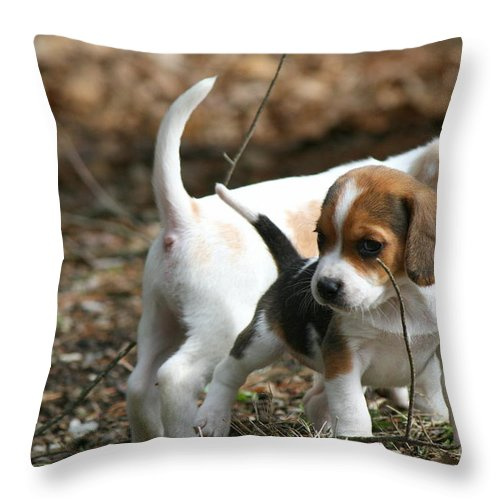 Beagle Puppy Throw Pillow featuring the photograph Exploring Beagle Pups by Neal Eslinger