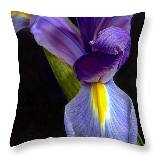 Black Throw Pillow featuring the photograph Eye-catcher by Heidi Smith
