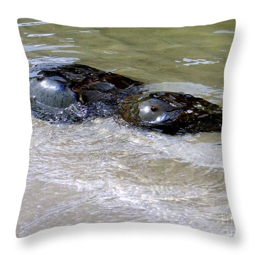 Water Throw Pillow featuring the photograph Eye See You by Ed Weidman