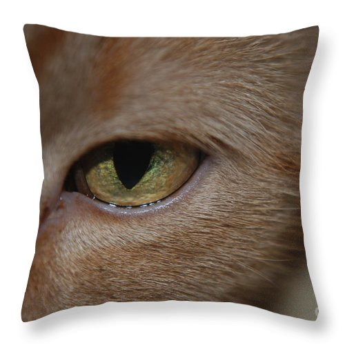 Orange Throw Pillow featuring the photograph Eye See You by Mark McReynolds