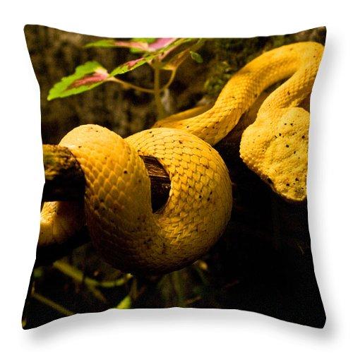 Yellow Throw Pillow featuring the photograph Eyelash Viper by Douglas Barnett