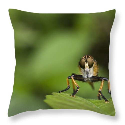 Digital Print Throw Pillow featuring the photograph Eyes For You by Tony Mills
