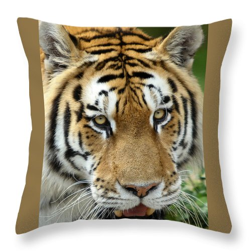 Tiger Throw Pillow featuring the photograph Eyes Of The Tiger by John Haldane