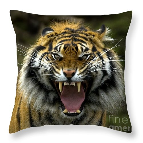 Tiger Throw Pillow featuring the photograph Eyes Of The Tiger by Mike Dawson