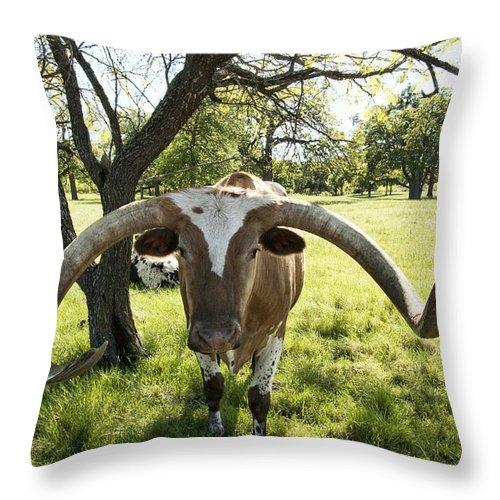 Longhorn Throw Pillow featuring the photograph Fabulous Texas Longhorn by Kathy Clark