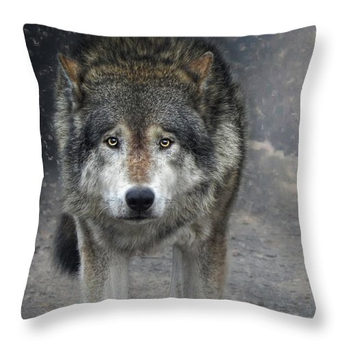 Animals Throw Pillow featuring the photograph Face To Face With The Wolf by Joachim G Pinkawa