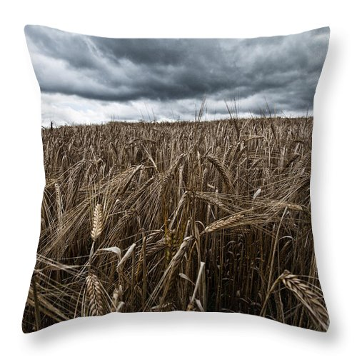Field Throw Pillow featuring the photograph Facing The Storm Color by John Farnan