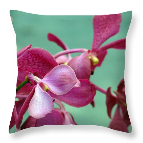 Pink Throw Pillow featuring the photograph Fade Into Pink by Debi Singer
