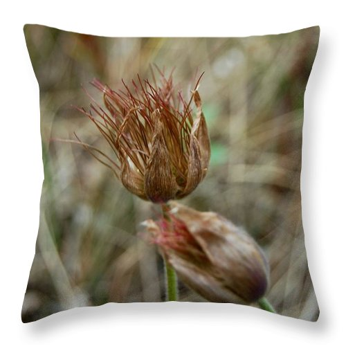 Dakota Throw Pillow featuring the photograph Faded Dream Pasqueflower by Dakota Light Photography By Dakota