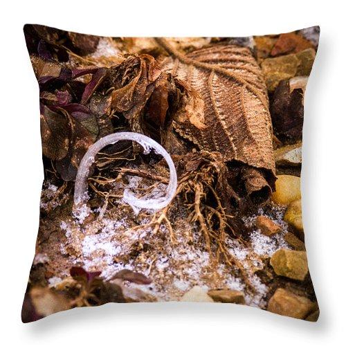 Fairy Throw Pillow featuring the photograph Fairy Ring Door by Douglas Barnett