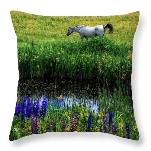 Horse Throw Pillow featuring the photograph Fairy Tale by Brenda Giasson