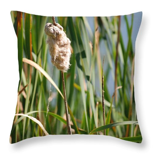 Nature Throw Pillow featuring the photograph Fall Cattail by Mark McReynolds