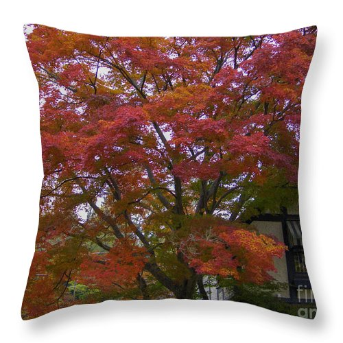 Fall Throw Pillow featuring the photograph Fall Color by Dale Powell